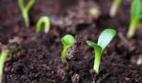 Встановлення забрудненості ґрунтів